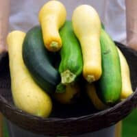 zucchini and yellow squash in a basket