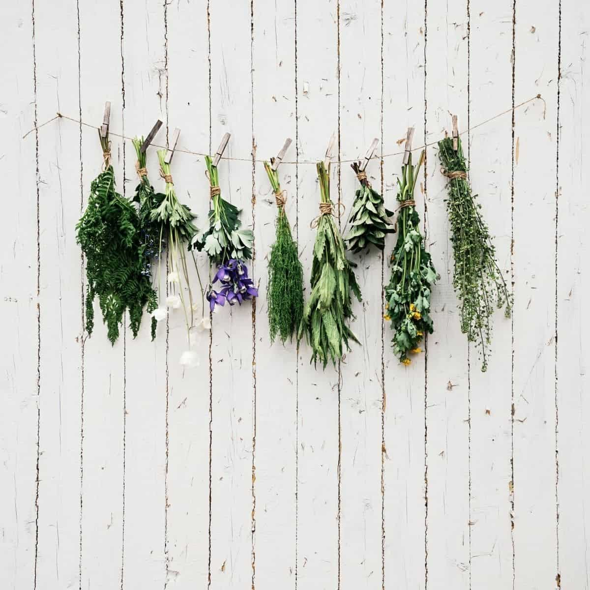 herbs for hormones drying on a wall